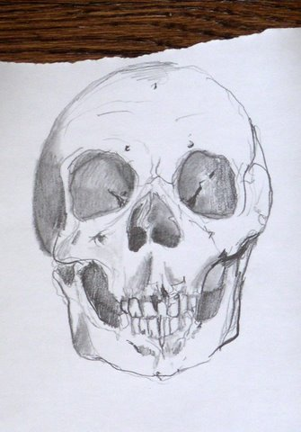 Skull Drawing Sweeney Jpg